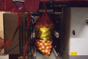 Inpakken van Uien bij J. Jansen Uienhandel BV Kruiningen