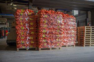 Opslaan van uien bij J. Jansen Uienhandel BV Kruiningen